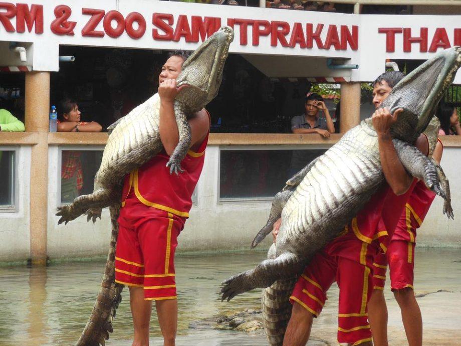 Tempat Percutian Menarik di Bangkok - Samutprakarn Crocodile Farm & Zoo